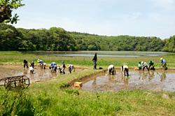 湿地内で行う田植えイベント