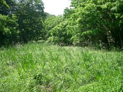 北川湿地1