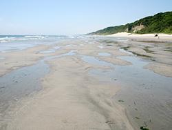 干潮時に現れる湧出帯(地下水)