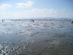 球磨川河口干潟