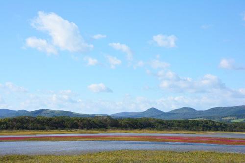 コムケ湖のサンゴソウ