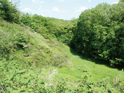 墓地計画地の急斜面