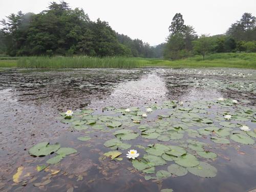 黒沢湿原3