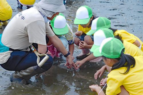 荒尾干潟で生物調査をする鹿島市の子供たち