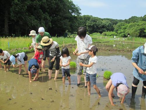 田植えをする田んぼの学校の子どもたち