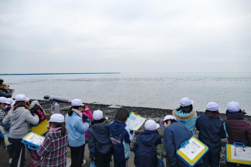 肥前鹿島干潟で行われる野鳥観察