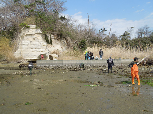 干潟での水生生物調査