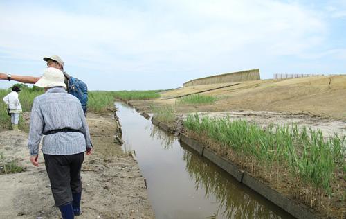 保護区内の水路は震災前のをそのまま利用、傾斜をもうけエコトーンに