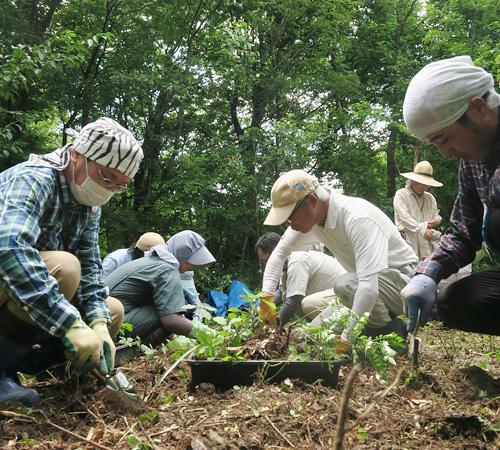 植栽・植樹作業