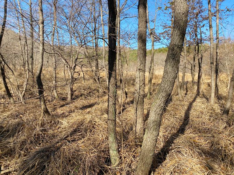 スンチョンの山奥にある泥炭湿地(撮影:永井さん)